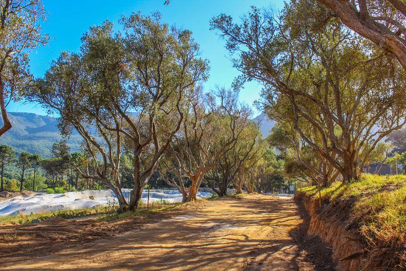 Olive avenue